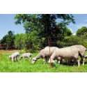 Síť ohradníková vodivá 90cm 50m délka pro ovce