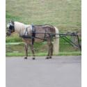 Pony a minipony